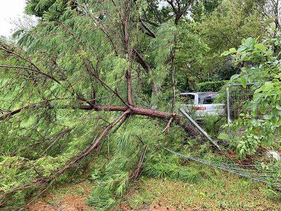 太い松の木が倒壊
