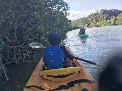 マングローブ林を進む